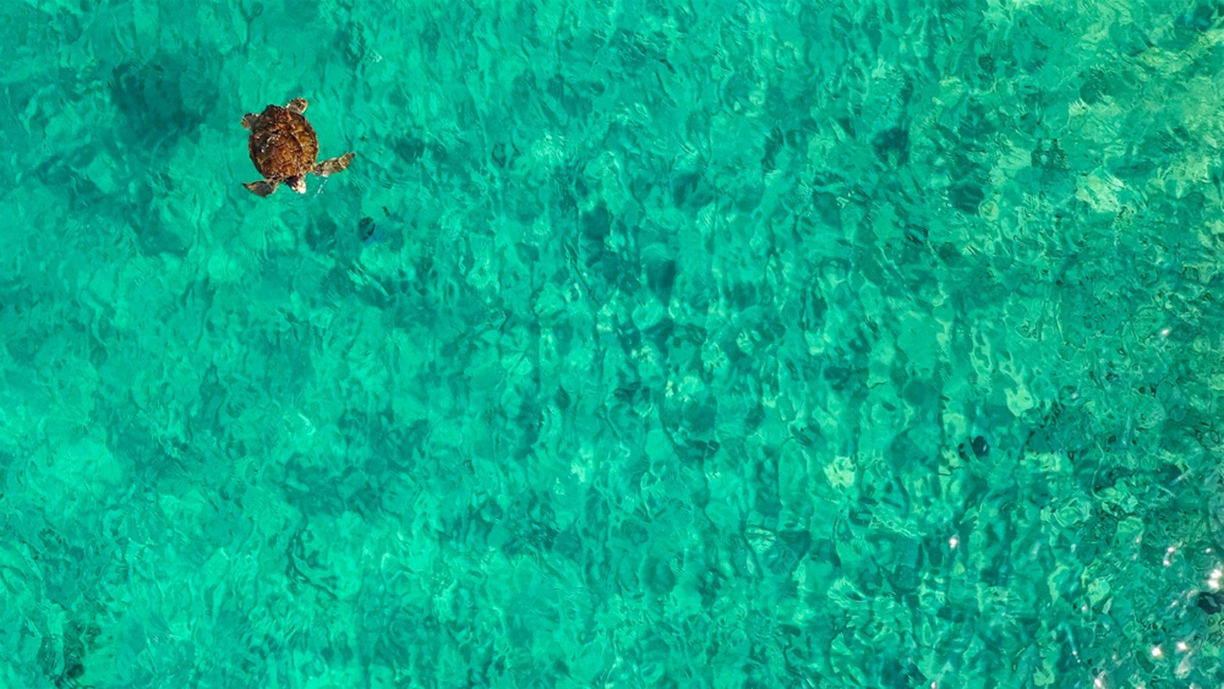 Chogogo Curacao Resort, is committed to sustainability and minimizing stress on our island's environment.