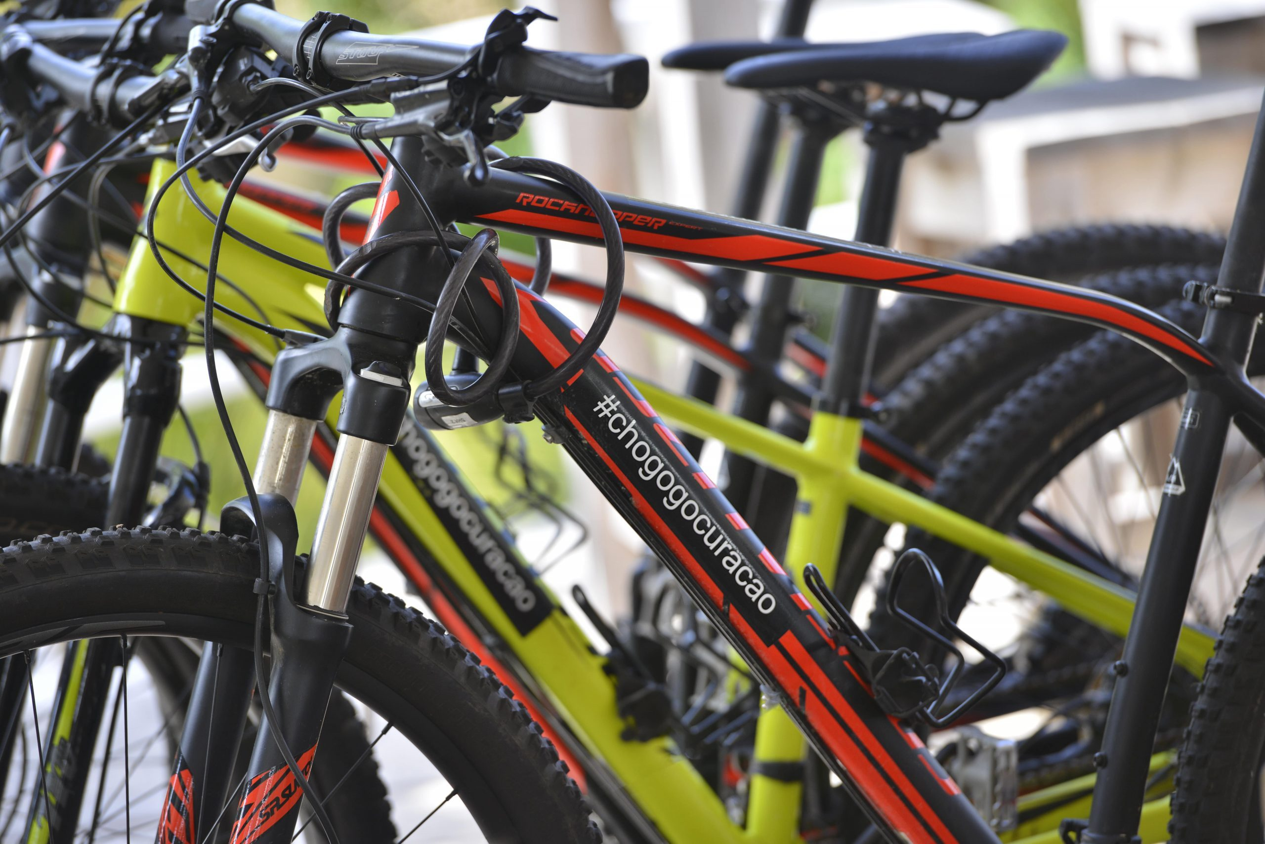 High quality mountain bikes for rent at the Chogogo Curacao bike rental.